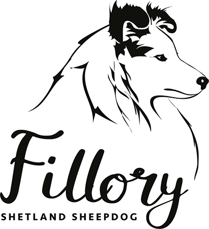 Fillory Shetland Sheepdog